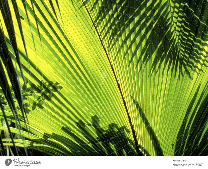 Seychelles Zufriedenheit
