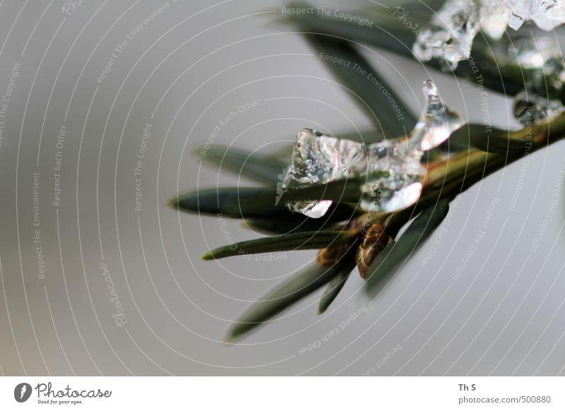 Frost Natur Pflanze Winter Eis Wetter authentisch ästhetisch Coolness nah