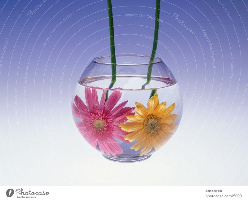 Blume in wasser Wasser