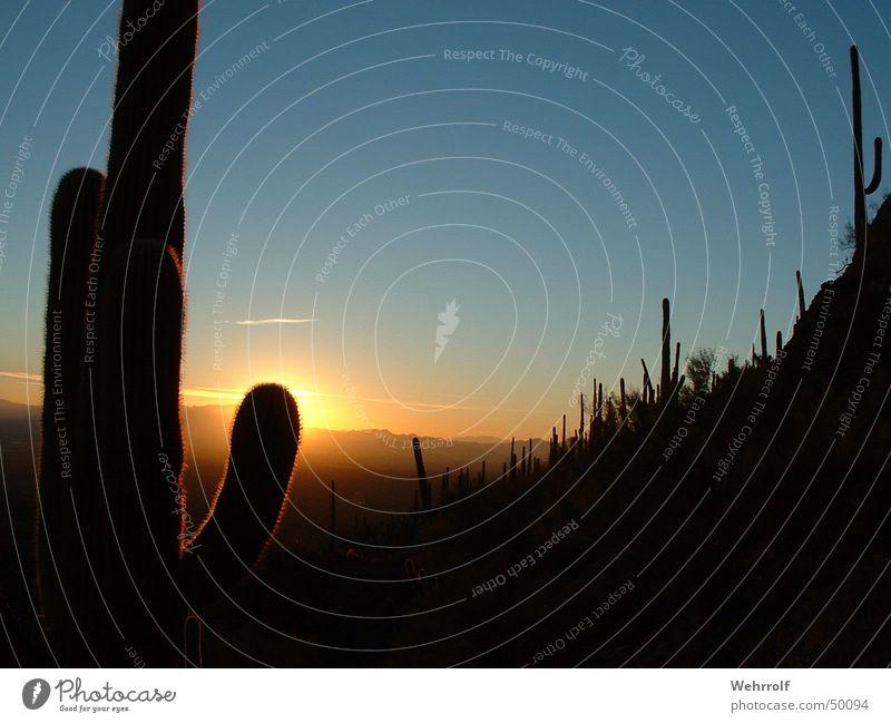 Sunset in Arizona Himmel Sonne USA Romantik Abenddämmerung Kaktus