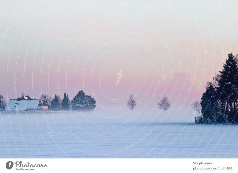 Irgendwann werden wir alle im Nebel verschwinden. Himmel Horizont Winter Schnee Baum Feld Haus Dach kalt blau rosa ruhig Einsamkeit Endzeitstimmung