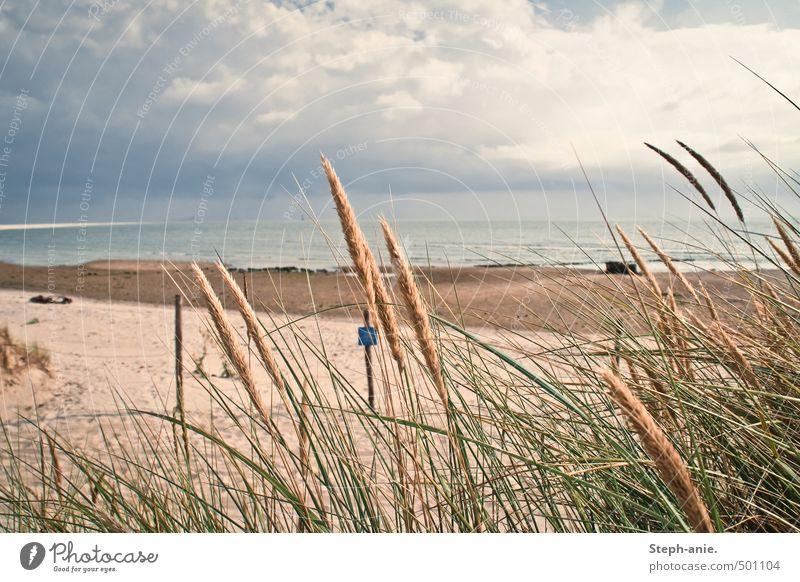 Leise Erinnerungen Wasser Pflanze Meer ruhig Wolken Strand dunkel Gras Küste Sand frisch Bucht Nordsee schlechtes Wetter Dünengras Borkum