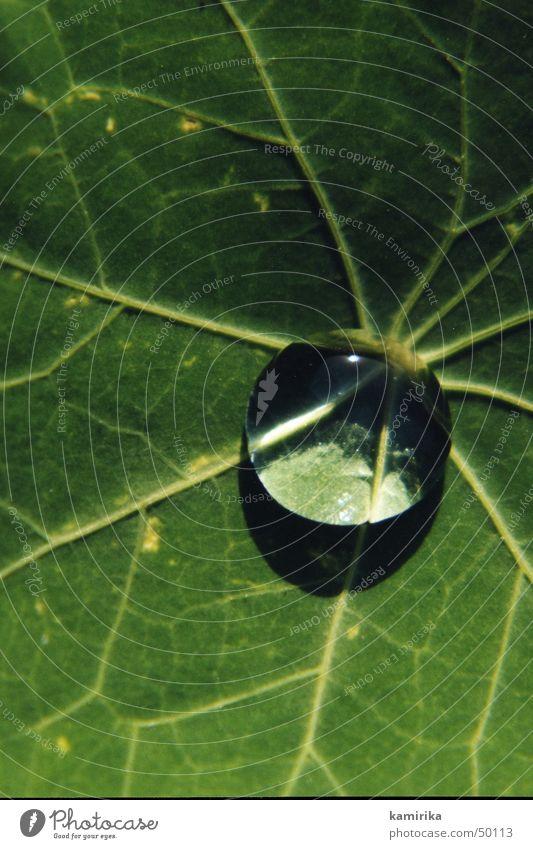 waterdrop rund Spiegel Gefäße Blatt grün Pflanze Kugel Wassertropfen Reflexion & Spiegelung Lotos hydrophob