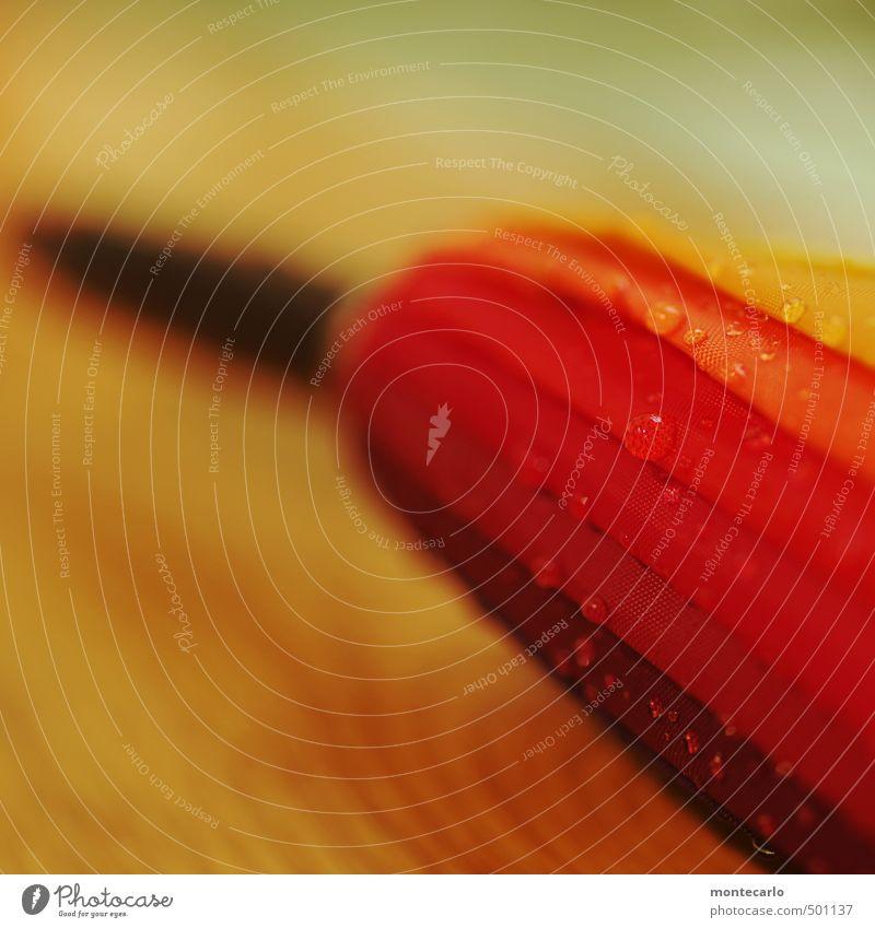 Piekst | Schirmspitze Regenschirm Holz Kunststoff dünn authentisch einzigartig lang nass rund rot Farbfoto mehrfarbig Innenaufnahme Nahaufnahme Detailaufnahme