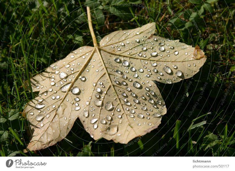 Das Blatt Natur grün Regen