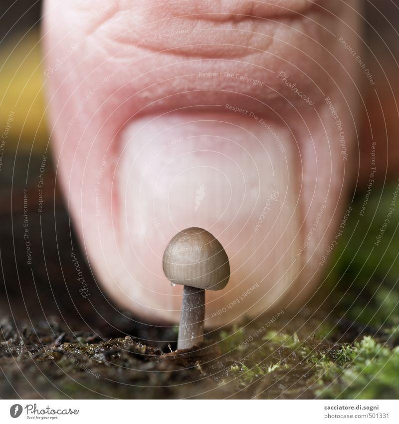 Pilz-Baby Natur Tier Herbst lustig Freiheit klein außergewöhnlich braun Kraft Erfolg Schönes Wetter frisch Beginn Finger niedlich Wandel & Veränderung