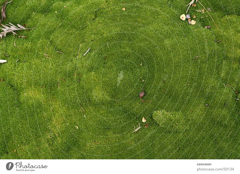 New Zealand Lush Natur grün Wiese weich Moos saftig Neuseeland Rotorua