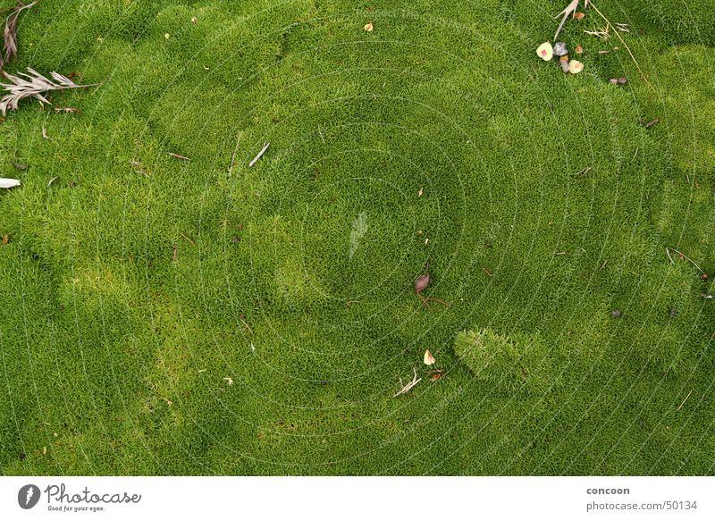 New Zealand Lush Wiese saftig grün Moos weich Rotorua Neuseeland grass Natur