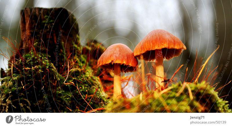 Waldboden. Baum Herbst Pilz matt Baumstumpf