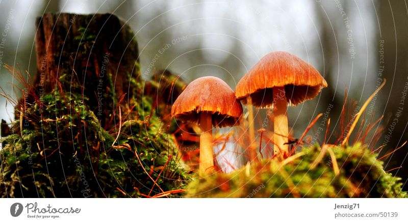 Waldboden. Baum matt Baumstumpf Herbst Pilz Makroaufnahme
