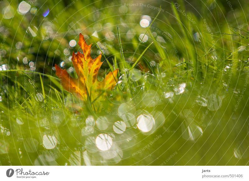 shine Pflanze Wassertropfen Sonnenlicht Herbst Schönes Wetter Gras Blatt Wiese glänzend nass natürlich grün Gelassenheit ruhig Hoffnung Natur Farbfoto