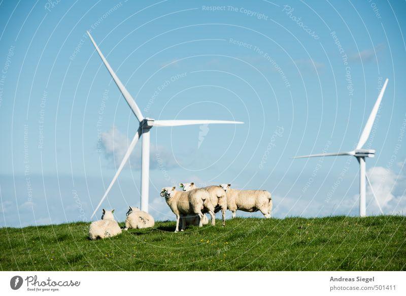 Määäh Himmel Natur Ferien & Urlaub & Reisen blau grün Sommer Erholung Landschaft ruhig Tier Wiese Küste Freiheit Energiewirtschaft liegen Zufriedenheit