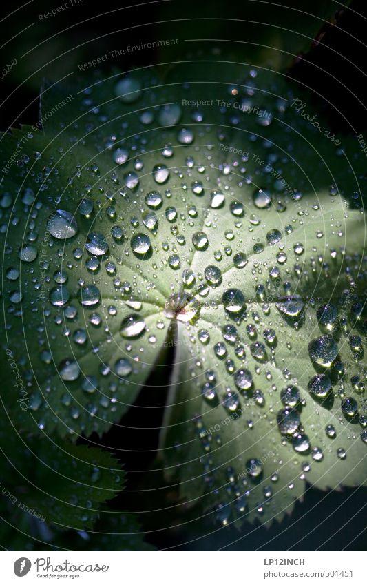 .O:°oÖ:.°. Umwelt Natur Tier Wasser Wassertropfen Pflanze Blatt Grünpflanze Garten dunkel nass grün Tau Lichtschein Lichteinfall Lichtpunkt hydrophob