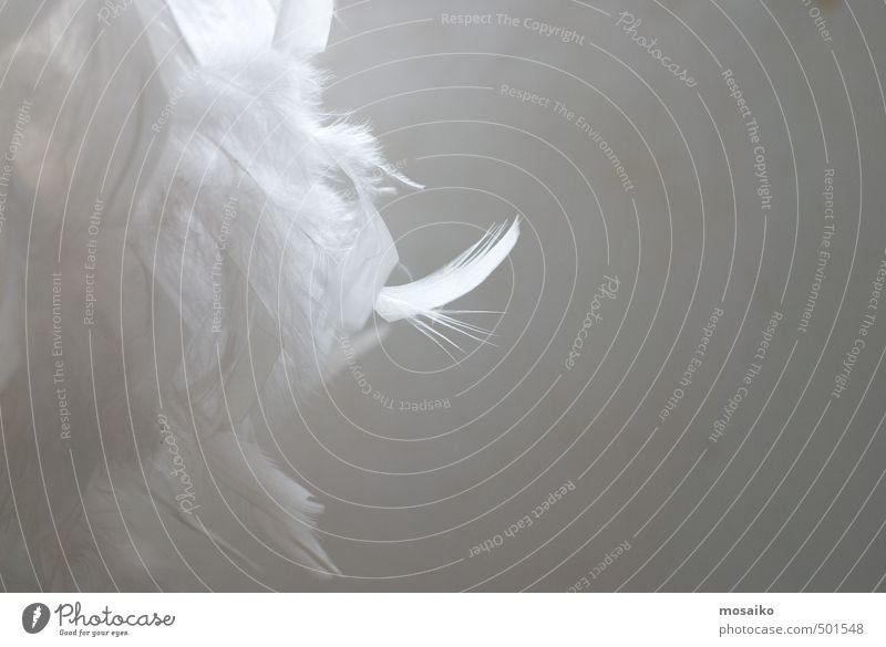 alt schön Erholung ruhig Liebe Schnee Tod Haare & Frisuren Gesundheitswesen fliegen träumen Wind Haut retro weich berühren