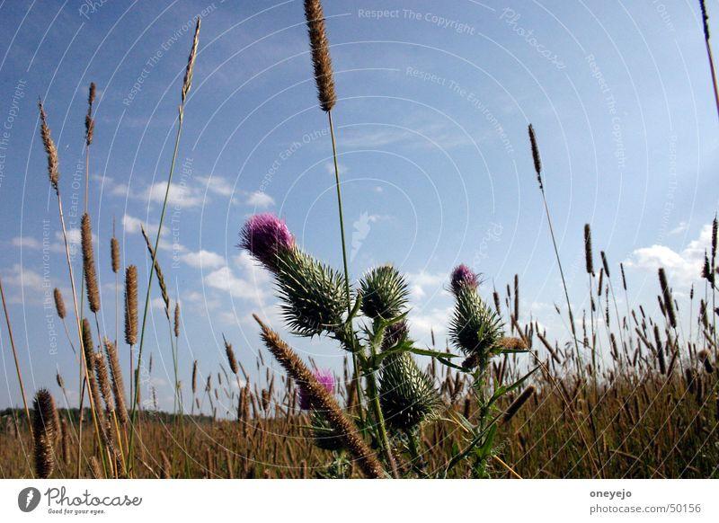 Ringing heat Himmel Sommer Heilpflanzen Unkraut Große Klette