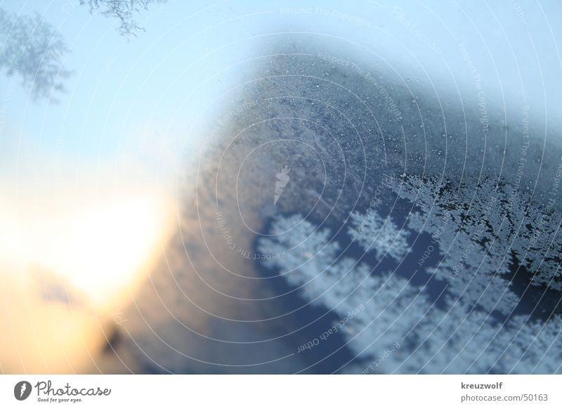 Eisblüten blau Winter kalt Fenster Frost Kristallstrukturen Eiskristall Eisblumen Schneekristall Wintermorgen