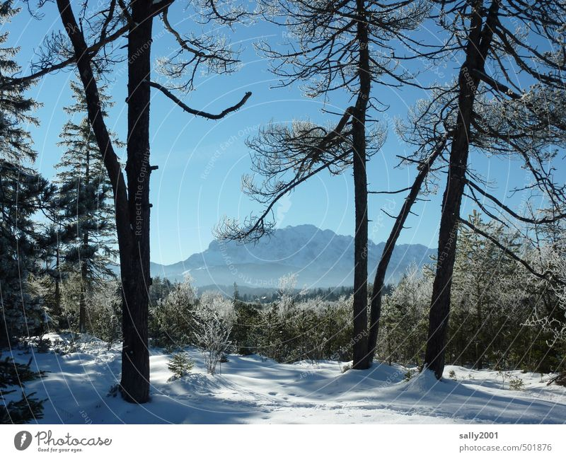 Winterzeit Natur Baum Erholung Einsamkeit Landschaft ruhig Ferne Winter Wald kalt Umwelt Berge u. Gebirge Schnee Eis wandern Schönes Wetter