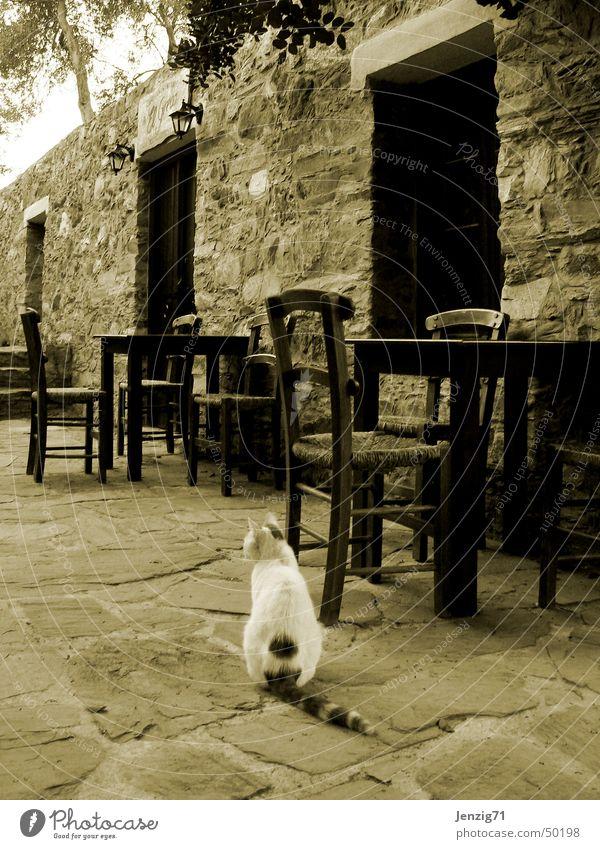 Tavern closed. Taverne Gastronomie Kreta Stuhl Tisch Katze geschlossen Einsamkeit ruhig Kneipe Hauskatze Sepia