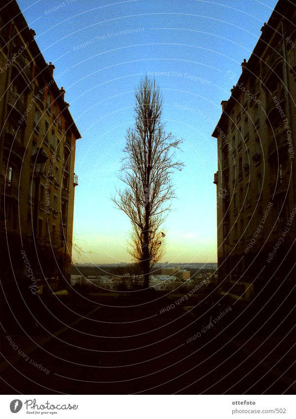 Lonesome Tree Stadt Baum Paris Sonnenuntergang Haus Architektur Abend