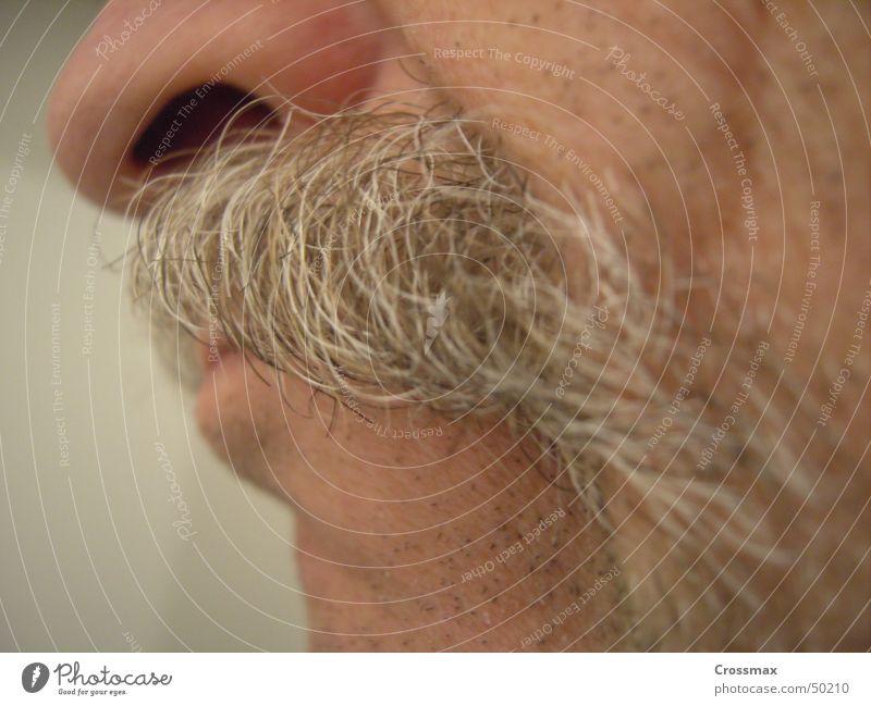 papa zieht ne schnute Oberlippenbart Bart Barthaare grauhaarig Lippen Grimasse Nasenloch Wange Kinn Hautfarbe Nahaufnahme alt Mann Senior Unschärfe schnauzer