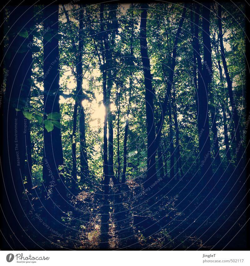 herbstsonne Umwelt Natur Landschaft Pflanze Sonne Sonnenlicht Herbst Baum Blatt Wald gehen frisch braun gelb grün schwarz weiß authentisch Zufriedenheit