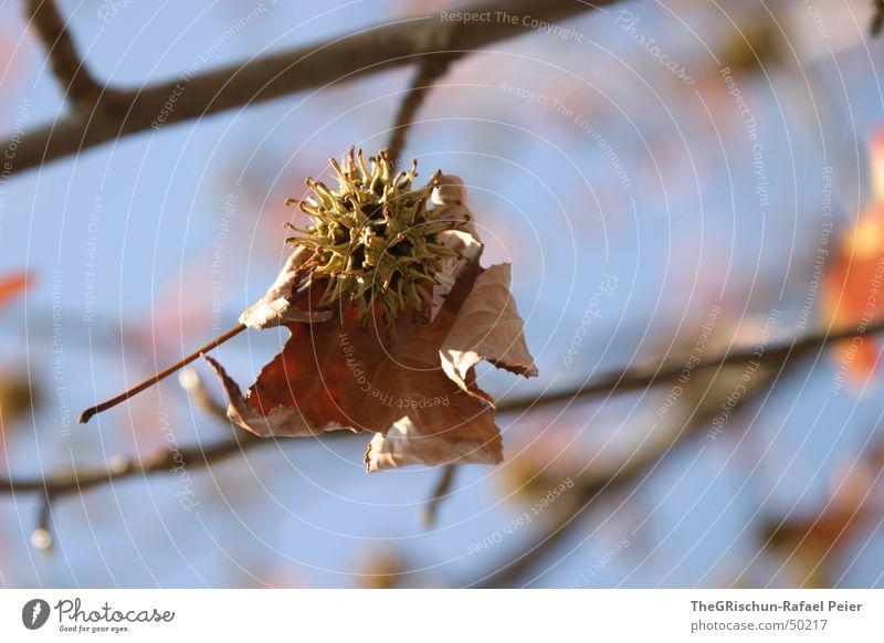 Blatt Baum blau rot Frühling orange Ast Schönes Wetter Kanton Tessin Ascona
