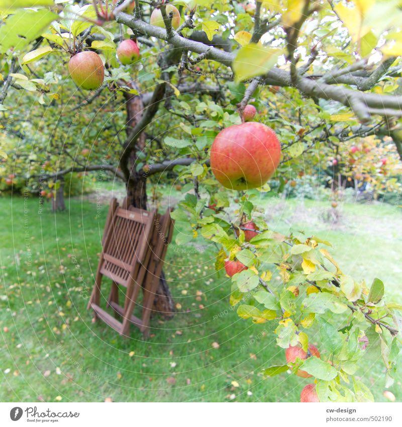 HEUTE: Welternährungstag Lebensmittel Apfel Ernährung Frühstück Mittagessen Kaffeetrinken Abendessen Picknick Bioprodukte Vegetarische Ernährung Natur Sommer