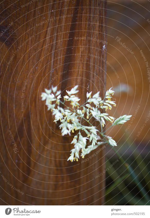 zart auf hart. oder und. Pflanze grün weiß ruhig Umwelt Blüte Gras braun Linie Feld Verschiedenheit filigran Pfosten Grünpflanze Gegenteil Wildpflanze