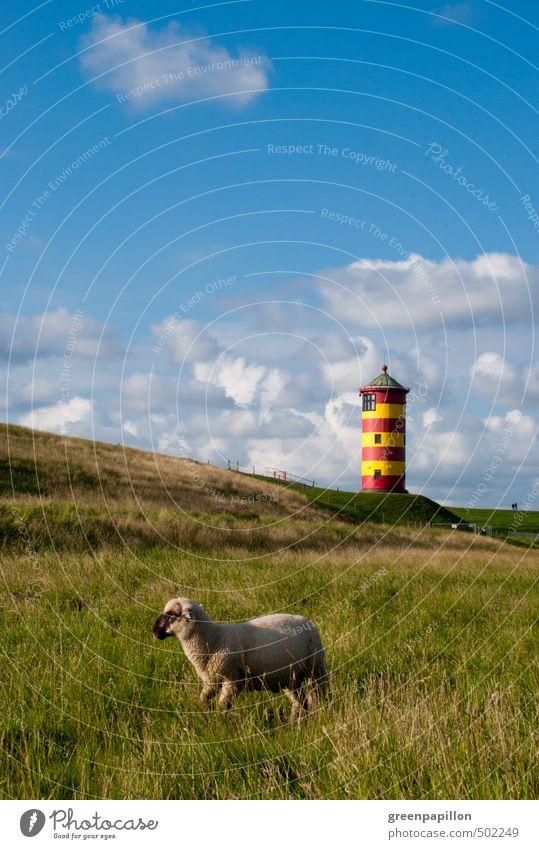 Schaf vor Pilsumer Leuchtturm Himmel Ferien & Urlaub & Reisen Sommer Sonne Meer Landschaft ruhig Strand Herbst Frühling Küste Deutschland leuchten Wellen