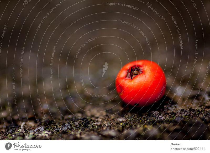 kugelrote vogelbeere Natur Farbe Pflanze Erholung grau klein liegen Lebensmittel glänzend Frucht Zufriedenheit Sträucher ästhetisch rund Neigung