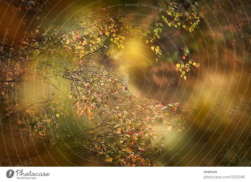 Herbststimmung Natur Baum Blatt herbstlich Herbstbeginn Herbstfärbung natürlich Farbfoto Außenaufnahme Detailaufnahme Menschenleer Textfreiraum rechts Tag Licht