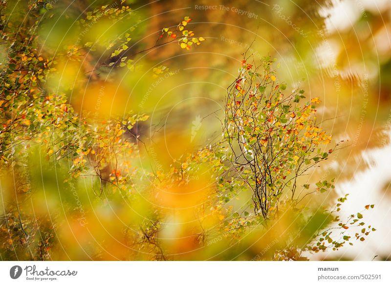 es herbstet Natur Baum Blatt Herbst natürlich herbstlich Herbstfärbung Herbstbeginn Birke Birkenblätter