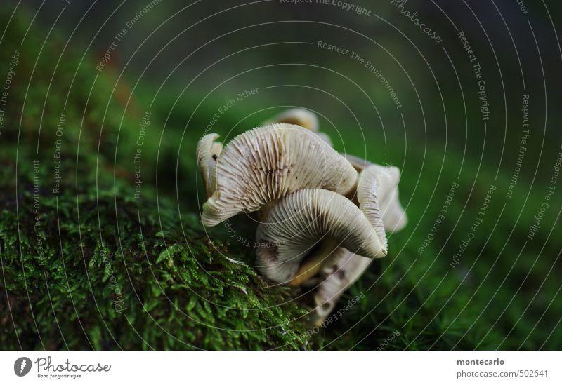 Neulich im Wald Umwelt Natur Pflanze Wildpflanze Pilz Duft authentisch frisch klein saftig trist trocken wild weich grau grün Farbfoto mehrfarbig Außenaufnahme