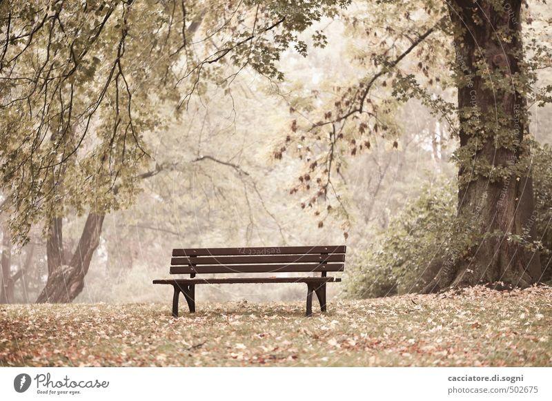 Regenpause Natur Baum Einsamkeit ruhig Umwelt Gefühle Herbst Gras außergewöhnlich hell träumen braun Freizeit & Hobby Park Zufriedenheit einfach