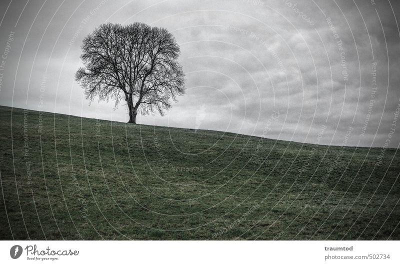 Baum auf Anhöhe Umwelt Natur Landschaft Tier Wolken Herbst Winter schlechtes Wetter Feld Hügel Menschenleer kalt trist Verschwiegenheit Traurigkeit Einsamkeit