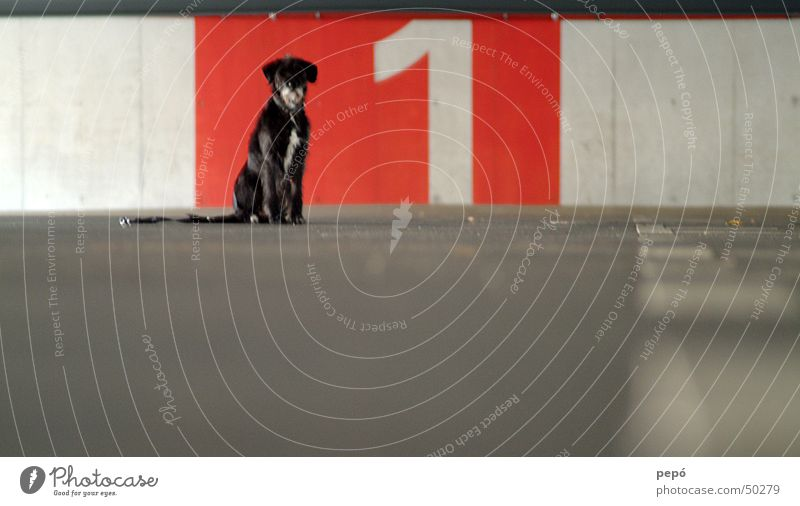 hündchen nummer 1 rot Hund Garage Parkhaus grau weiß Tier Ziffern & Zahlen Beton nala