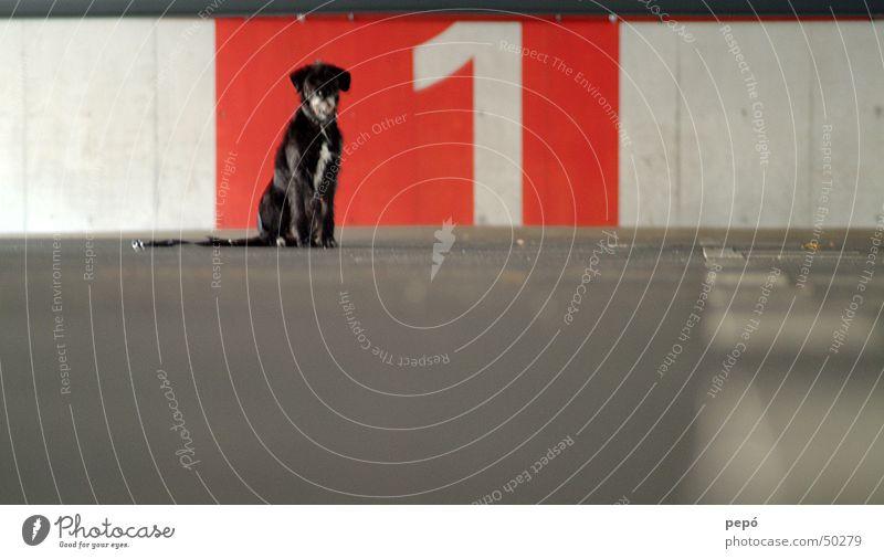 hündchen nummer 1 weiß rot Tier grau Hund Beton Ziffern & Zahlen Garage Parkhaus