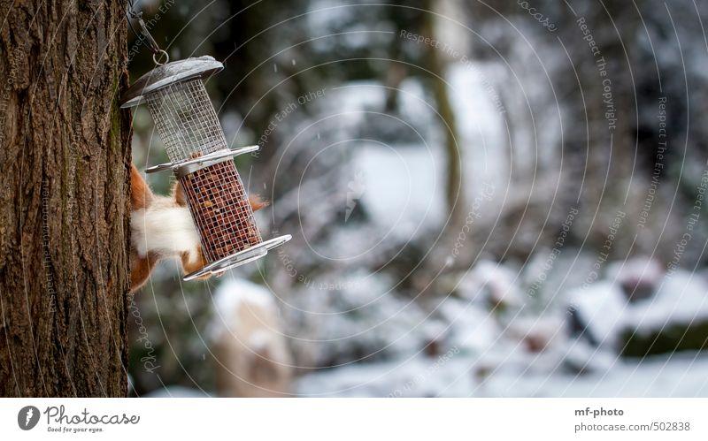 Freeclimber Baum Tier Winter Garten orange Park Eichhörnchen