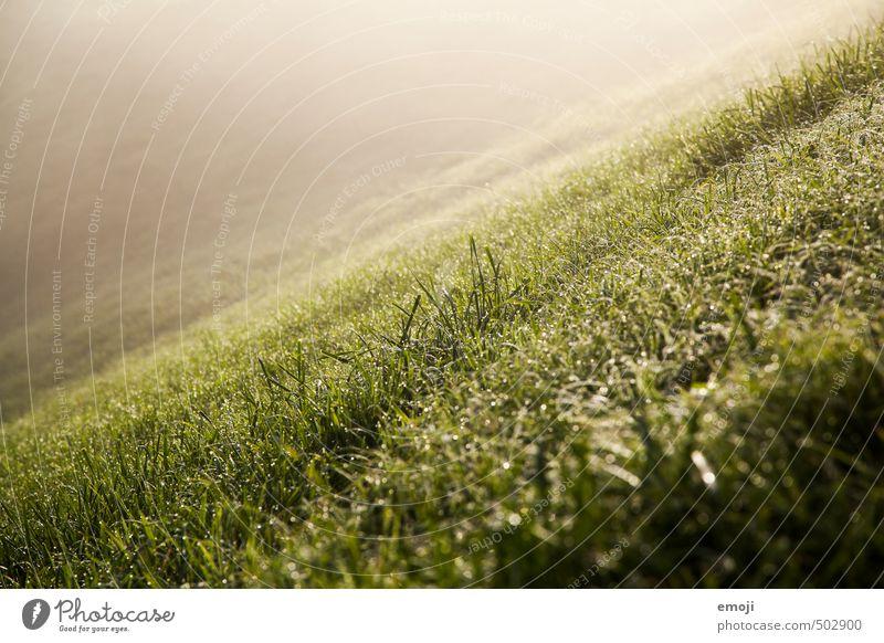 Hang Natur grün Landschaft Umwelt Wiese Gras natürlich Hügel Berghang