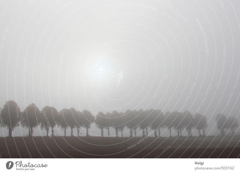 undurchsichtig... Umwelt Natur Landschaft Pflanze Himmel Herbst Nebel Baum Allee Baumreihe Feld leuchten stehen Wachstum authentisch außergewöhnlich dunkel