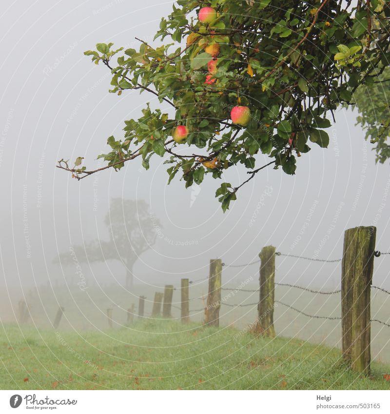 Zeitumstellung   ... Natur grün Pflanze Baum Landschaft ruhig dunkel Umwelt Wiese Herbst Gras grau Holz natürlich außergewöhnlich Stimmung
