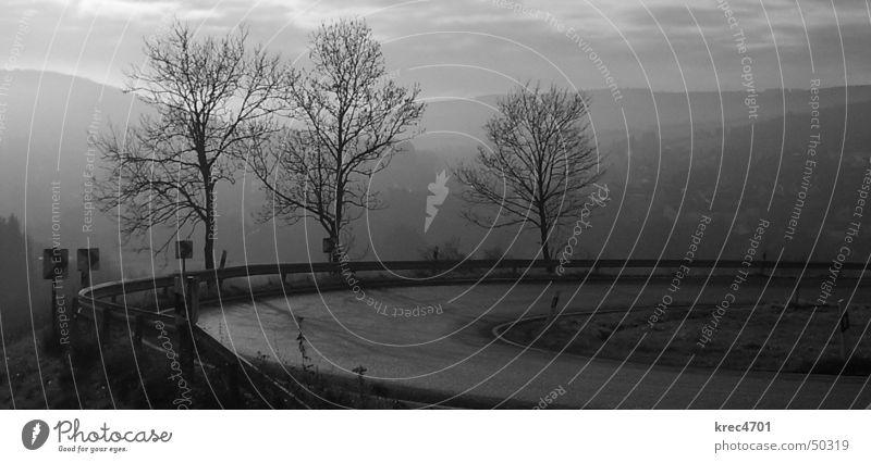 Vorsicht! Kurve! Baum Eifel Nebel Gegenlicht abwärts aufwärts Herbst Schilder & Markierungen Straße leitblanke Berge u. Gebirge Schwarzweißfoto