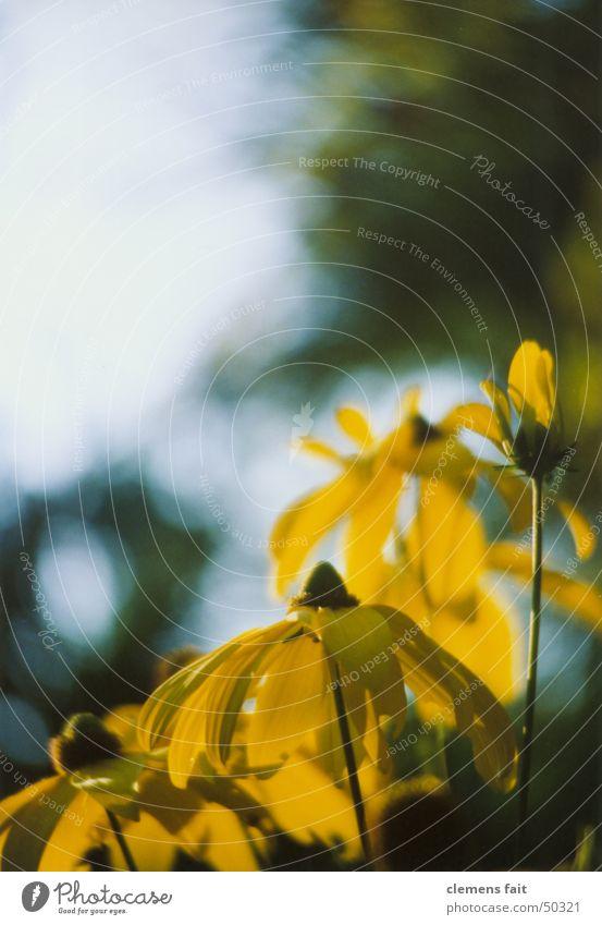 Omas Garten Himmel Blume gelb Garten Schönes Wetter