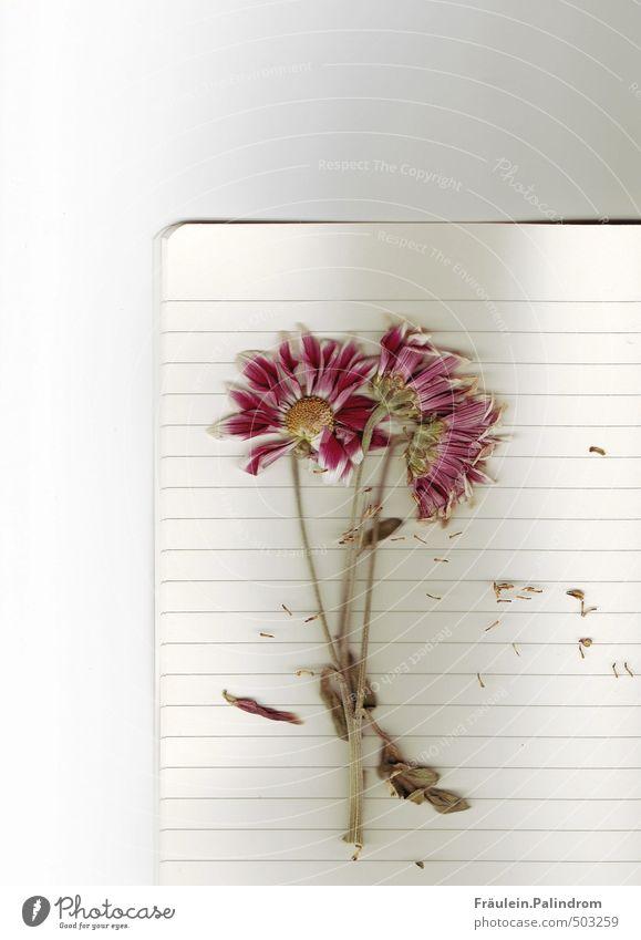 briefpapier III. Natur Pflanze Blume Blatt Blüte Papier Blühend Zettel Schreibwaren