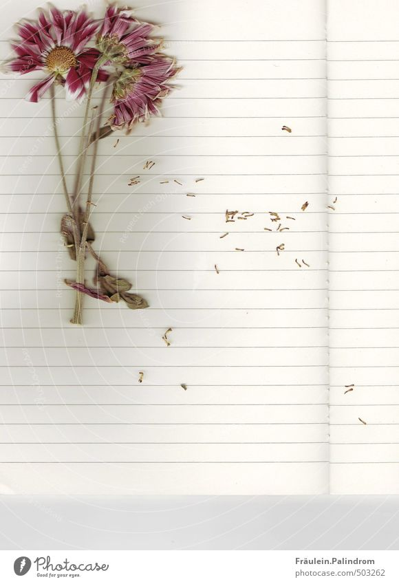briefpapier II. Pflanze Blume liegen Papier lesen Schreibstift Zettel Schreibwaren