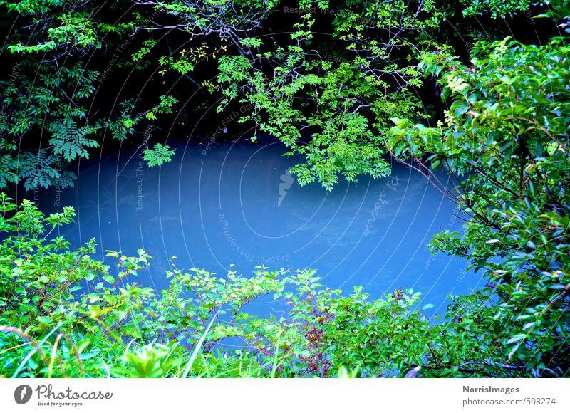 Oraculum Natur Pflanze blau grün Sommer Wasser Baum Landschaft Wald Umwelt Gras See Stimmung träumen ästhetisch Sträucher