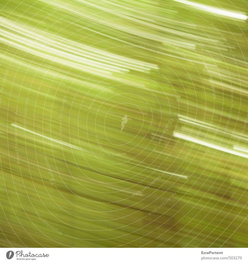 Wald in Bewegung Ferien & Urlaub & Reisen Kunst Umwelt Natur Landschaft Pflanze Frühling Sommer Herbst Klima Klimawandel Baum ästhetisch außergewöhnlich braun
