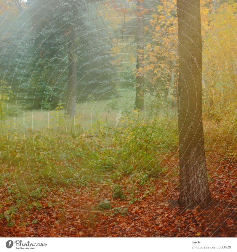 Herbst Umwelt Natur Pflanze schlechtes Wetter Nebel Baum Gras Wiese Wald verblüht braun grün Traurigkeit Vergänglichkeit Blatt Herbstlaub herbstlich Farbe