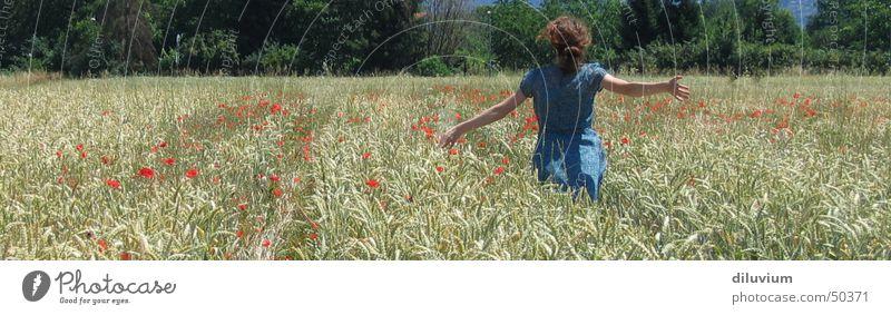 freiheit und freude Mädchen blau Sommer Luft Feld groß rennen Kleid Panorama (Bildformat)