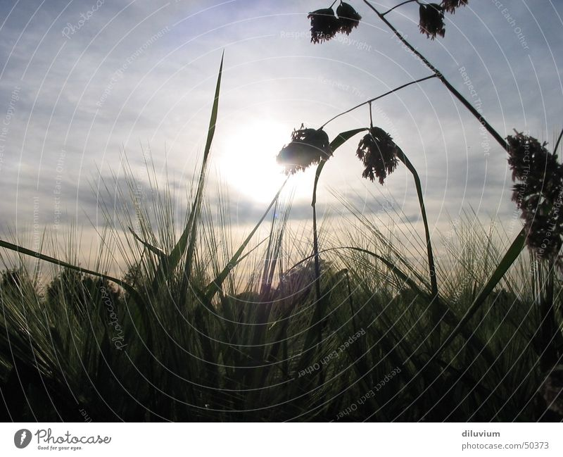 durch das gras Himmel Sonne grün Wiese Gras